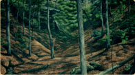 Hand painted Hardwood Forest Valley mural