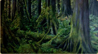 Southeast Alaska Rainforest
