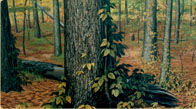 Hand painted Arkansas Forest mural