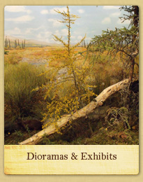 Dioramas and Exhibits