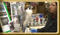 Painting a peregrine falcon model