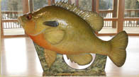 6 foot tall hand sculpted redbreast sunfish