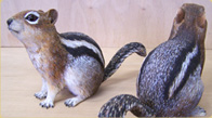 Golden Mantled Ground Squirrels